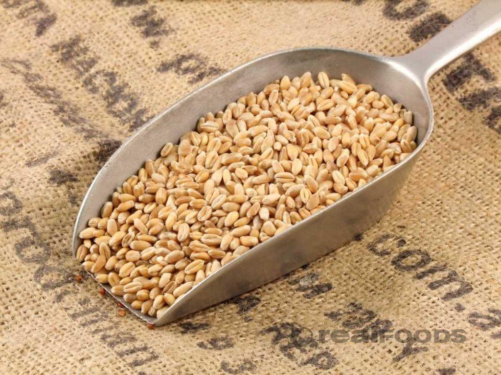El trigo