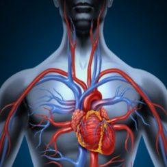 remedios caseros para la circulacion de la sangre