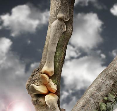 Aumenta la fuerza ósea