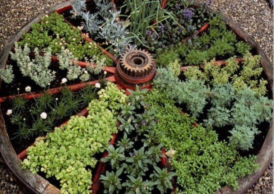 Hierbas Medicinales para cultivar en casa