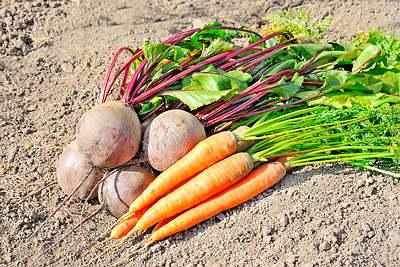 La zanahoria y remolacha