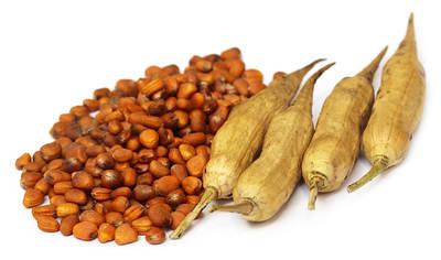 Semillas de rábano