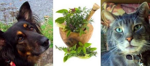 Recetas Caseras Para Tratar a Su Perro o Gato